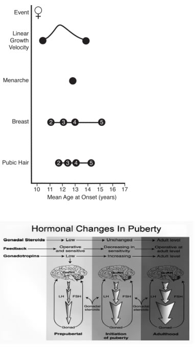 normal_puberty