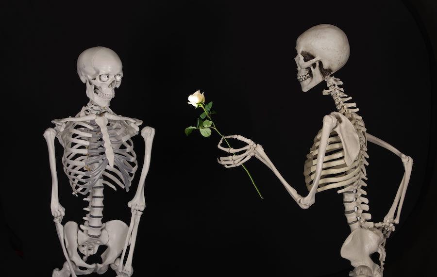 Skeleton, bones. Image courtesy https://www.pxfuel.com/